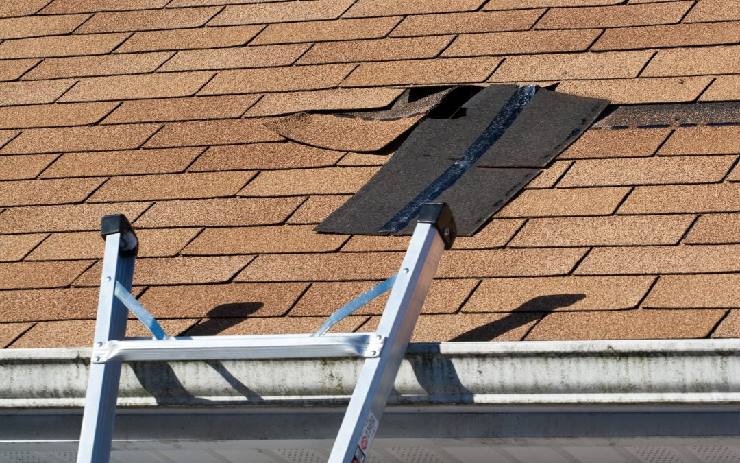 5 Summer Hazards That Could Harm Your Roof